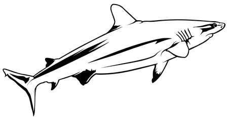 Gray Reef Shark (Carcharhinus amblyrhynchos) - Black Outline Illustration, Vector 矢量图像