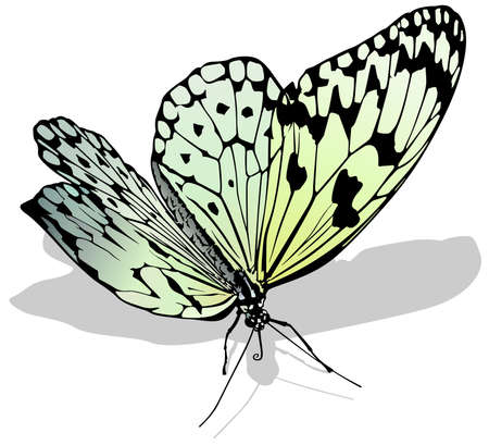 Large White Butterfly - Isolated Colored Illustration with Shadow on White Background, Vector