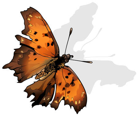 Question Mark - Beautiful Butterfly Isolated on White Background, Vector Illustration