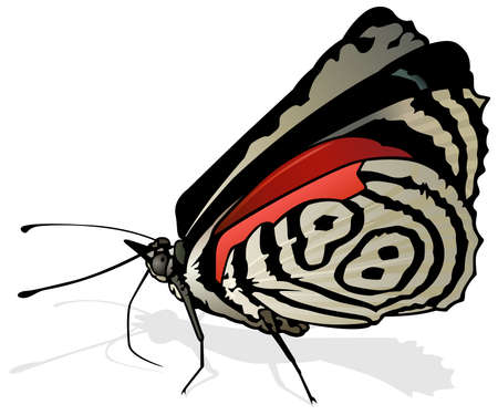 Eighty-eight Butterfly - Beautiful Butterfly Isolated on White Background, Vector Illustration