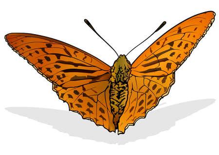 Argynnis anadyomene - Beautiful Orange Butterfly Isolated on White Background, Vector Illustration