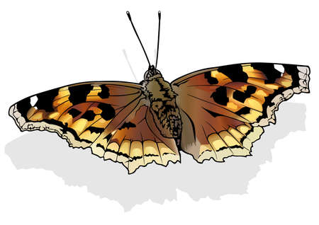 Compton Tortoiseshell - Beautiful Colorful Butterfly Isolated on White Background, Vector Illustration