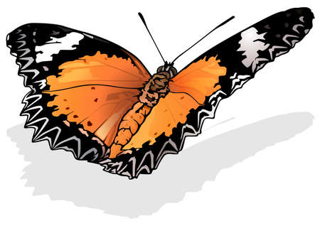 Red Lacewing - Beautiful Butterfly Isolated on White Background, Vector Illustration 矢量图像