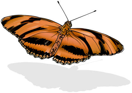 Banded Orange Heliconian - Beautiful Butterfly Dryadula phaetusa Isolated on White Background, Vector Illustration 矢量图像