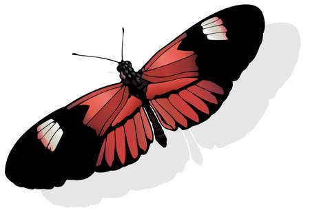 The Postman - Beautiful Butterfly Heliconius melpomene Isolated on White Background, Vector Illustration