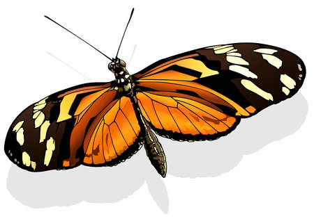 Ismenius Tiger - Beautiful Butterfly Heliconius ismenius Isolated on White Background, Vector Illustration 矢量图像