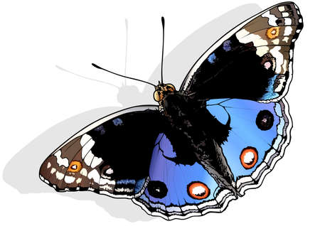 Blue Pansy - Beautiful Butterfly Junonia orithya Isolated on White Background, Vector Illustration