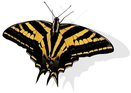 Three-tailed Swallowtail - Beautiful Butterfly Papilio pilumnus Isolated on White Background, Vector Illustration