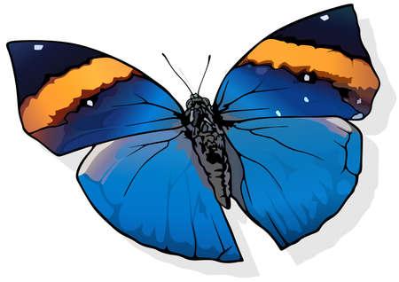 Orange Oak-leaf - Beautiful Butterfly Kallima inachus Isolated on White Background, Vector Illustration