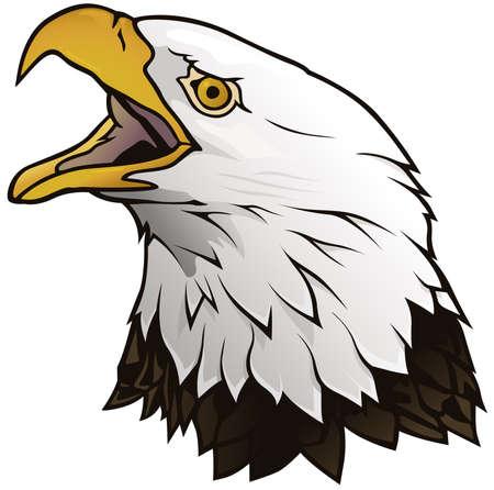 Bald Eagle Portrait Isolated on White Background - Graphic Illustration, Vector Ilustración de vector