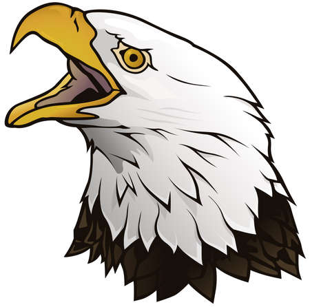 Bald Eagle Portrait Isolated on White Background - Graphic Illustration, Vector Vektorové ilustrace