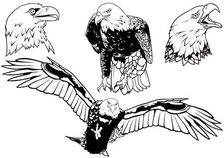 Black and White Set of Wild Bald Eagle as Hand Drawn Illustrations Isolated on White Background, Vector 矢量图像