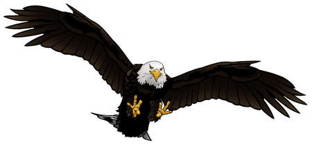 Flying Bald Eagle as Colored Hand Drawn Illustration Isolated on White Background, Vector Graphic Vector Illustration