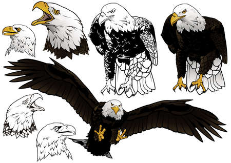 Set of Wild Bald Eagle as Hand Drawn Illustrations Isolated on White Background, Black and White and Colored Birds,Vector Graphic