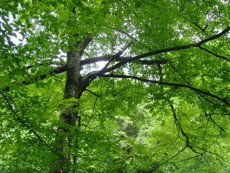 glen: ricketts glen state park Stock Photo