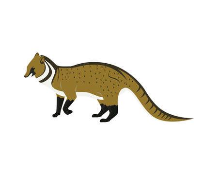 Detailed Civet with Standing Gesture Illustration Vector