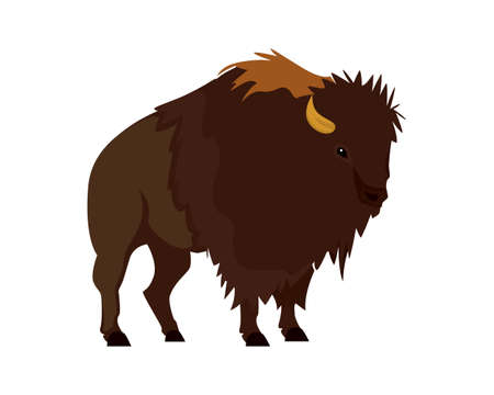 Detailed Bison Illustration with Standing Gesture Vector