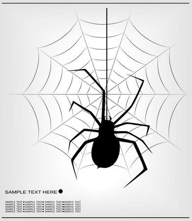spider  Stock Vector - 14396137