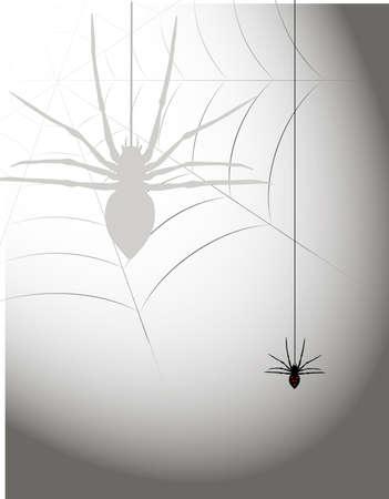 spider Stock Vector - 15933528