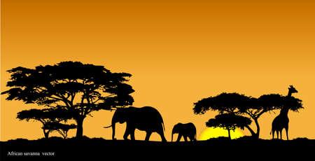 back lit: African savanna Illustration