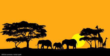 africa outline: African savanna Illustration