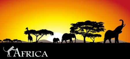 African savanna Vector