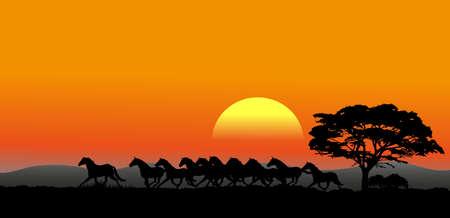Die Bilder zeigen eine laufende Herde bei Sonnenuntergang