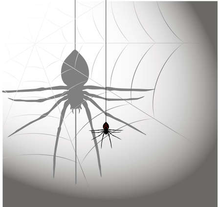 on the image the silhouette of a spider in a web is presented Stock Vector - 18564278