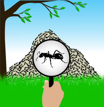 ant under a magnifying glass Vector