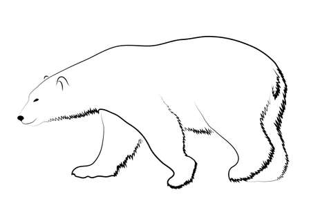 hunter: Polar bear on a white background Illustration