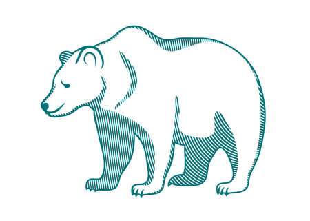 brown bear on a white background Illustration
