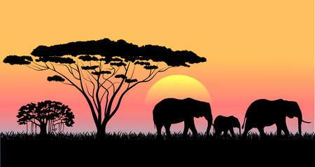 African savanna an evening landscape  Vector