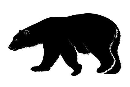 grizzly: polar bear on a white background Illustration