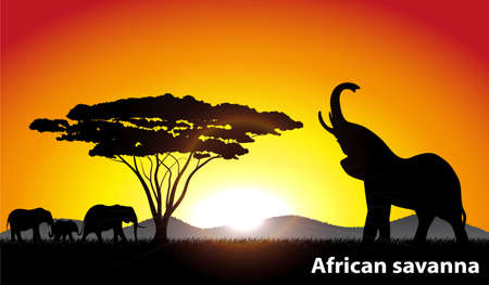 africa tree: African savanna an evening landscape Illustration