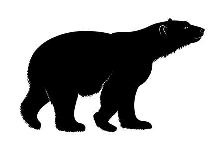 polar: polar bear on a white background Illustration