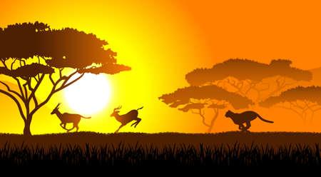 savanna: African savanna an evening landscape Illustration
