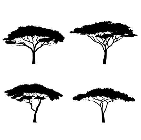 tall tree: silhouettes of trees