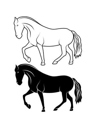 thoroughbred: drawing thoroughbred stallion