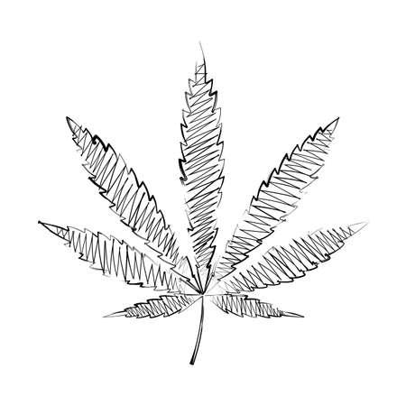 hemp: sheet of hemp drawing pencil Illustration