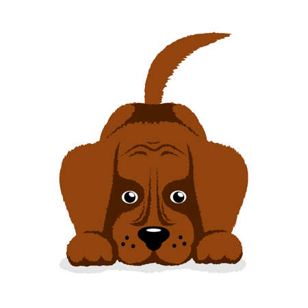 foolish: dog puppy on a white background