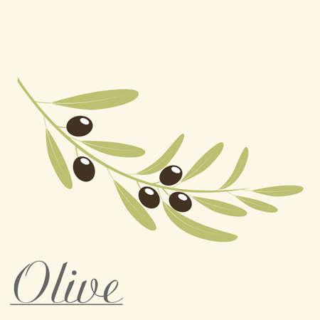 Olive Zweig Vektor-Illustration. Standard-Bild - 80100786