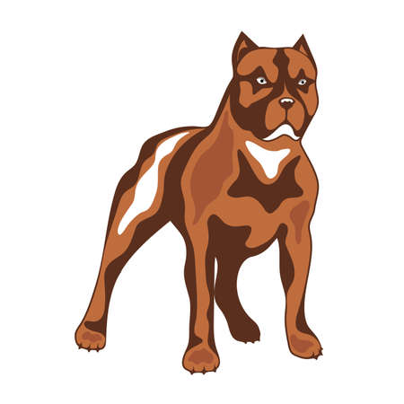 Dog of combative breed illustration. Illustration