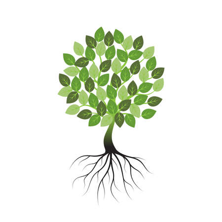Green tree with roots an icon on a white background. Ilustracja