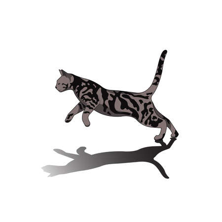drawing of a pet cat vector illustration