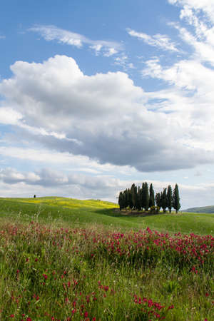 cypress: Cypress Group in Tuscany