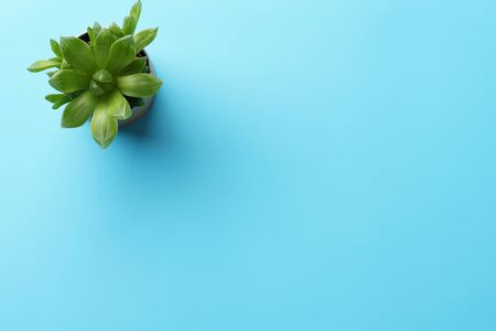 A succulent plant in a pot on a blue desk. Flat lay with copy space.