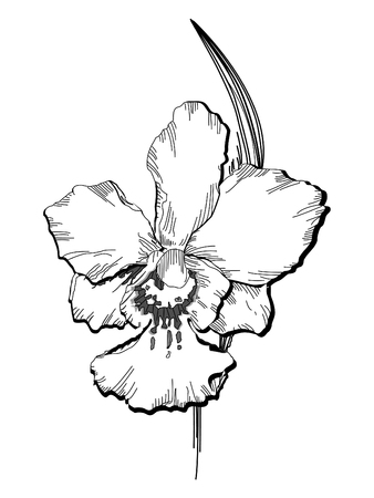 essential illustration of orchid flower Vector