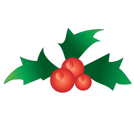 holly berries vector design element Stock Vector - 3699930