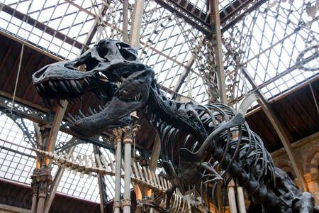 dinosaur Editorial