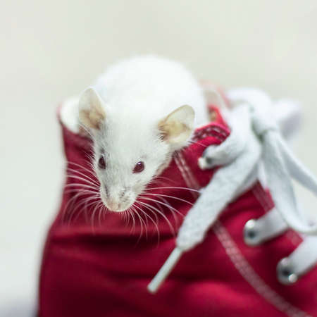 Symbol of New Year 2020 - white or metal (silver) rat mouse.Christmas card New Year 2020 .White mouse stands at 2020 Stock fotó